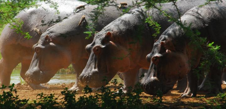 Voyage sur-mesure, Séjour authentique dans un village et Safari dans les grands parcs de Tanzanie