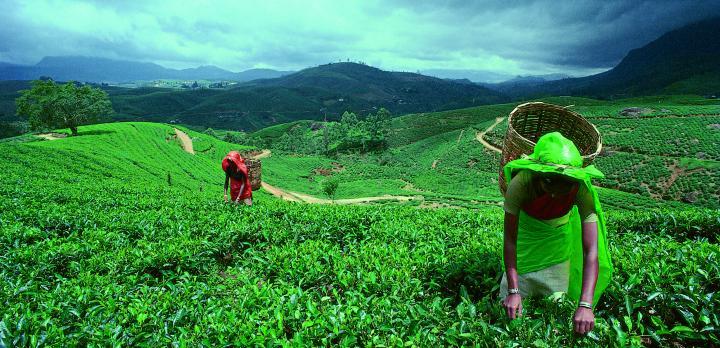 Voyage sur-mesure, Séjour dans un domaine de thé
