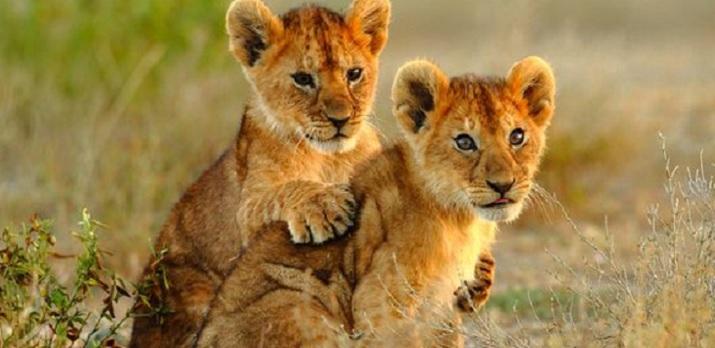 Voyage sur-mesure, Des grands parcs du Kenya vers l'Océan indien
