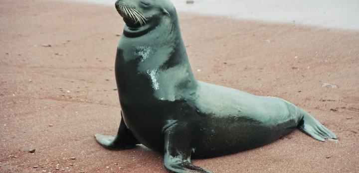 Voyage sur-mesure, Croisière aux îles Galapagos