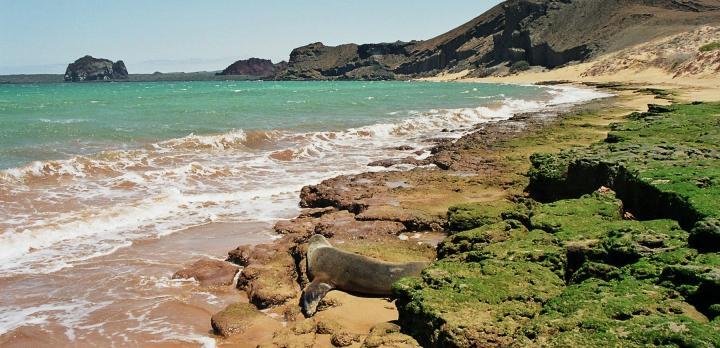 Voyage sur-mesure, Croisière pour découvrir les îles Galapagos