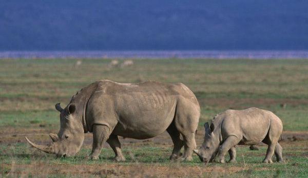 Voyage sur-mesure, Safari Express Tanzanie en famille et séjour plage à Zanzibar