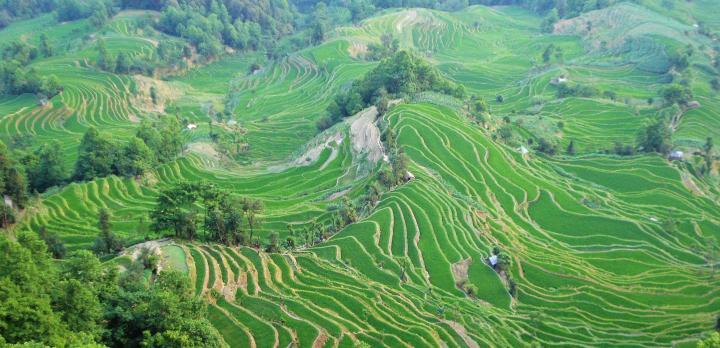 Voyage sur-mesure, Dali à Shangri-La et les rizières en terrasse du Yuanyang