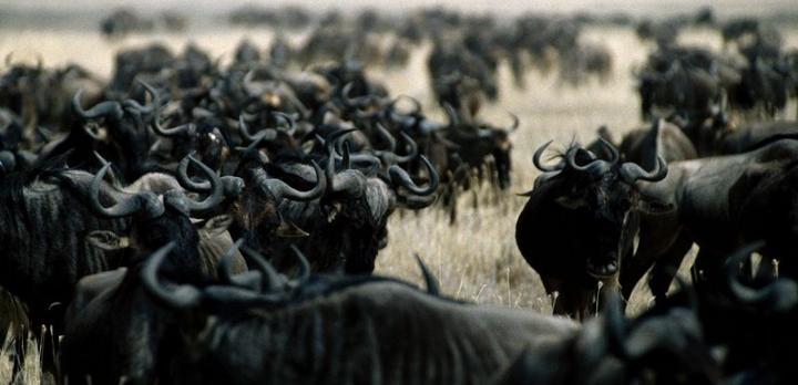 Voyage sur-mesure, Safari en famille