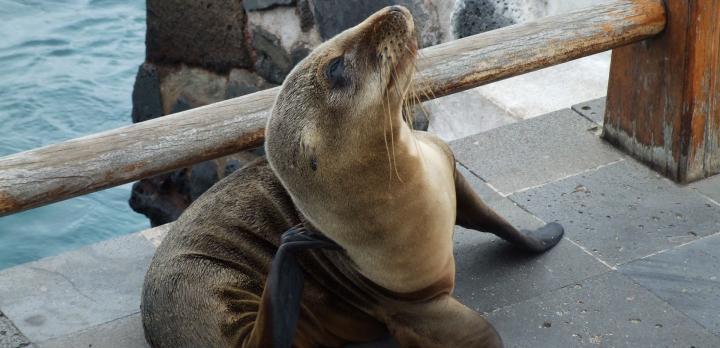 Voyage sur-mesure, Séjour aux Galapagos