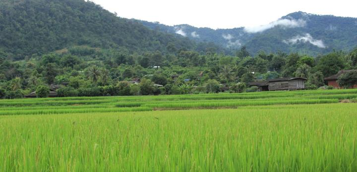 Voyage sur-mesure, Circuit dans le Nord de la Thaïlande