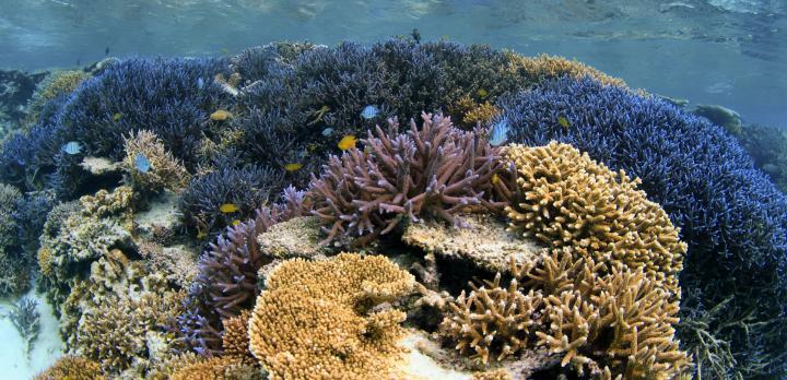 Voyage sur-mesure, Découverte d'Iriomote : kayak, mangrove & snorkelling