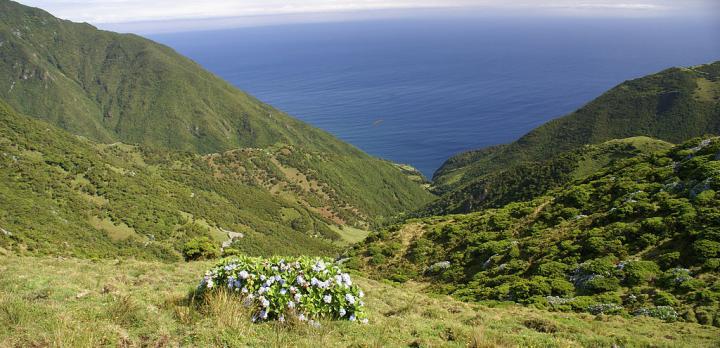 Voyage sur-mesure, Voyage en Famille aux Açores