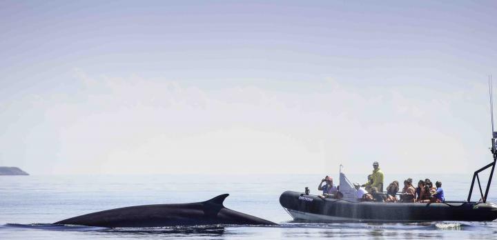 Voyage sur-mesure, Autotour au Québec : forêts, lacs, fjord, baleines...