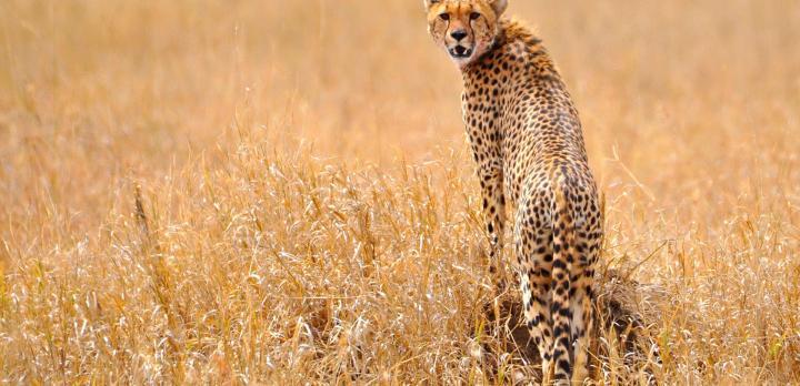 Voyage sur-mesure, Safari Grande Migration en Tanzanie et Zanzibar