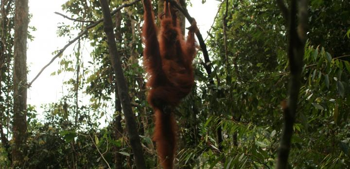Voyage sur-mesure, Chez Darma à Sumatra