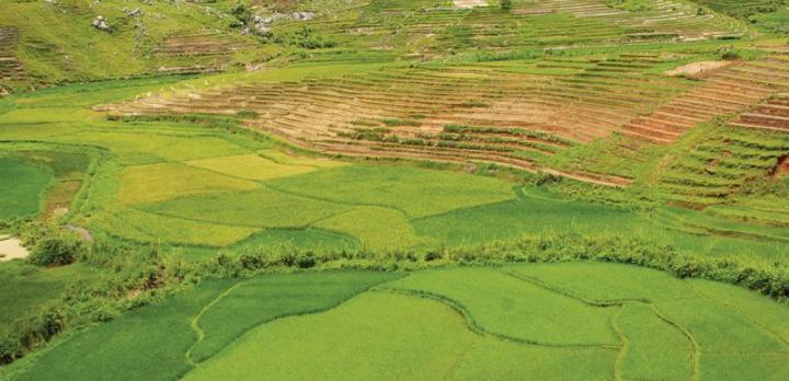 Voyage sur-mesure, Madagascar chez un ethnologue-herboriste