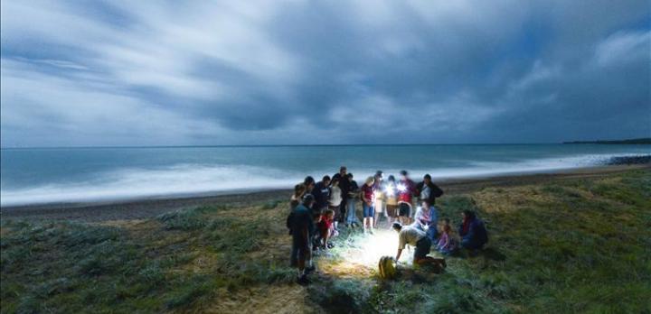 Voyage sur-mesure, La ponte des tortues dans le Queensland