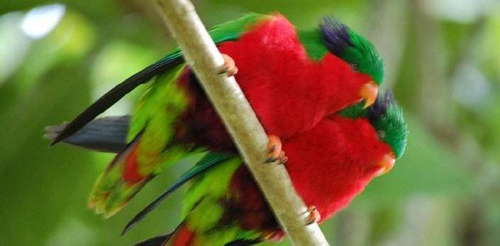 Voyage sur-mesure, Séjour nature et oiseaux à Rimatara
