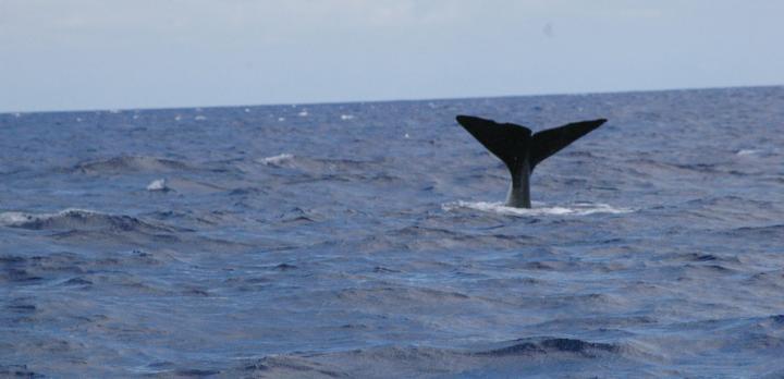 Voyage sur-mesure, Observation Baleines et dauphins