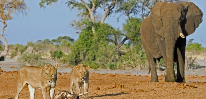 Voyage sur-mesure, Aventure en bus 4x4 du Botswana à la Tanzanie