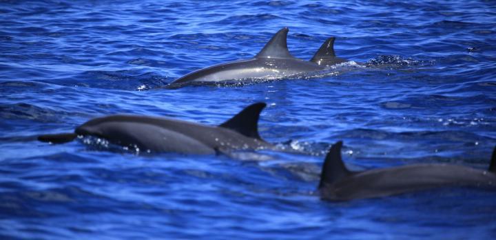Voyage sur-mesure, Observation des baleines et des dauphins à Papeete