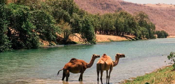 Voyage sur-mesure, Sur la route de l'Encens de Mascate à Salalah