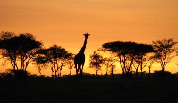 Voyage sur-mesure, Safari Tanzanie en petit groupe & séjour à Zanzibar