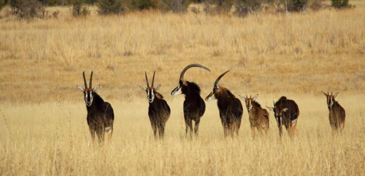 Voyage sur-mesure, Visite des Chutes Victoria et safari dans le parc Hwange
