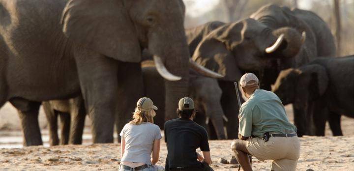 Voyage sur-mesure, Autotour Zimbabwe: safaris et chutes Victoria