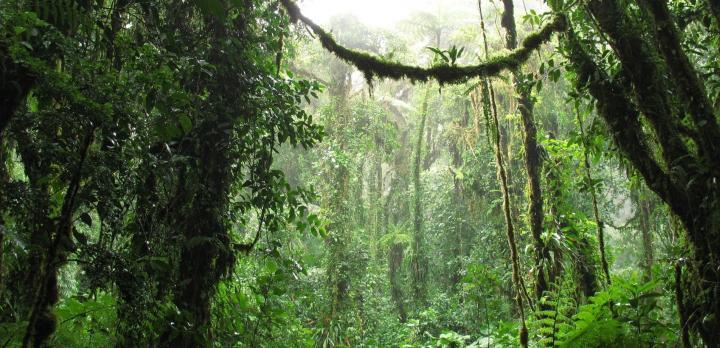 Voyage sur-mesure, Combiné Nicaragua - Costa Rica