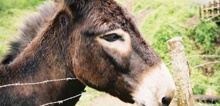 Voyage sur-mesure, Balade avec un âne à Pico