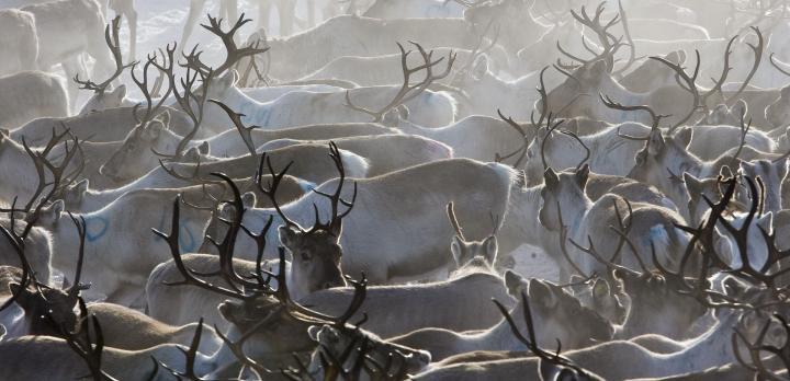 Voyage sur-mesure, Voyage authentique au coeur de la Laponie sauvage