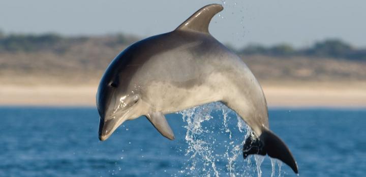 Voyage sur-mesure, Le Portugal en famille : Lisbonne et observation des dauphins