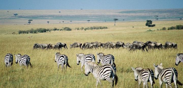Voyage sur-mesure, Le Kenya : lodges élégants en avion-taxi