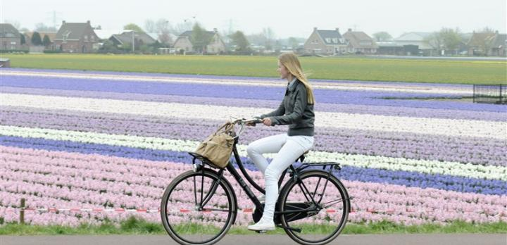 Voyage sur-mesure, Escapade a vélo dans la région de Randstad