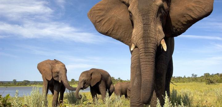 Voyage sur-mesure, Autotour Botswana : des Chutes Victoria au Delta de l'Okavango