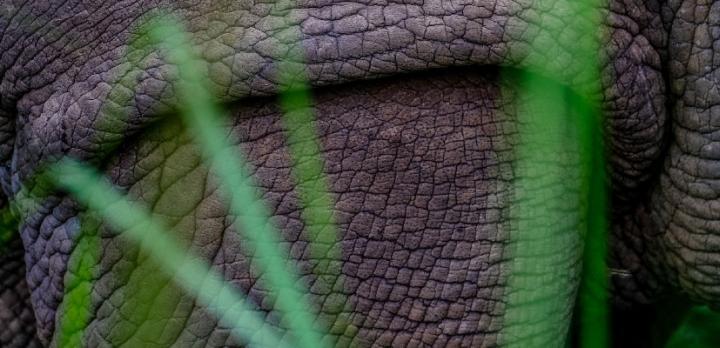 Voyage sur-mesure, Voyage budget en Ouganda: safaris, primates & paysages