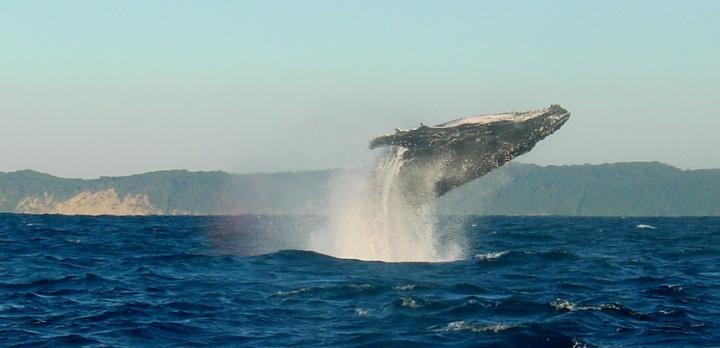 Voyage sur-mesure, Observation des baleines