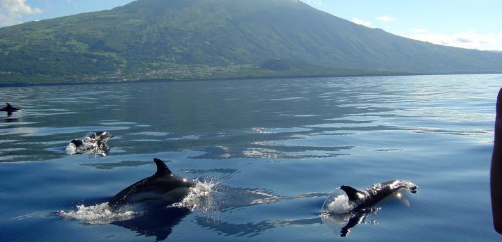 Voyage sur-mesure, Sao Miguel et les autres îles : Faial, Pico et Sao Jorge