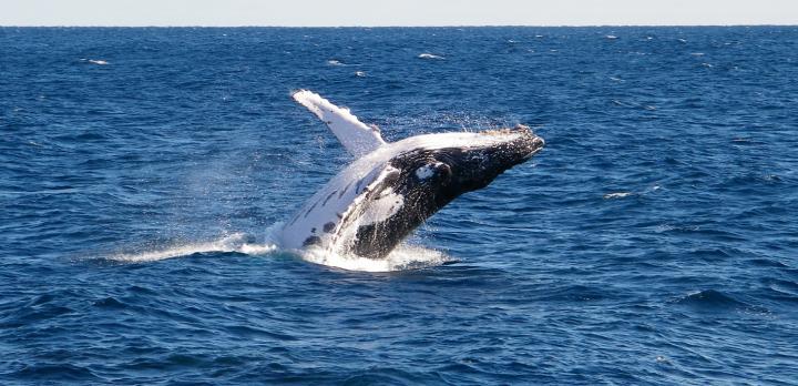 Voyage sur-mesure, Baleines et dauphins