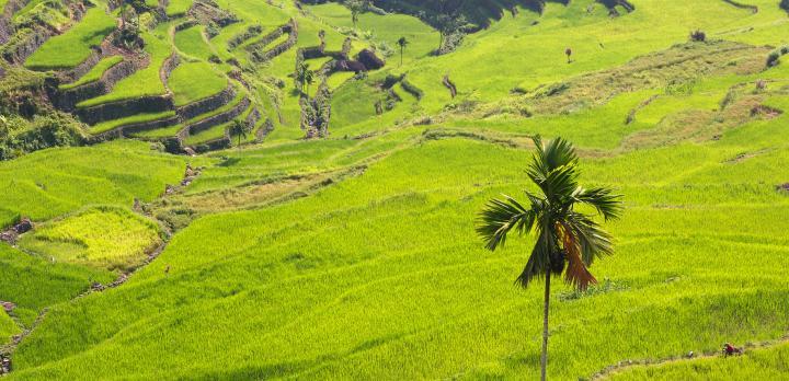 Voyage sur-mesure, Bangaan