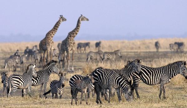 Voyage sur-mesure, Parc national de Mburo