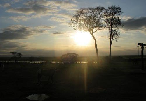 Voyage sur-mesure, Miranda/Pantanal Sud