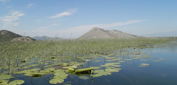 Voyage sur-mesure, Lac de Skadar