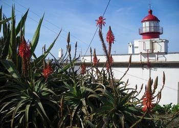 Voyage sur-mesure, Ponta Do Pargo