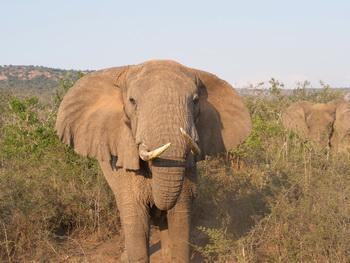 Voyage sur-mesure, Parc national de l'Akagera