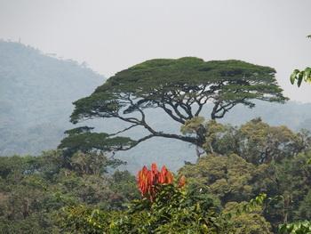 Voyage sur-mesure, Forêt de Nyungwe