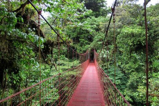 Voyage sur-mesure, Monteverde (Réserve Biologique)