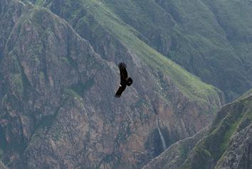 Voyage sur-mesure, Canyon du Colca